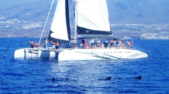 Excursion Catamaran Palma - Freebird