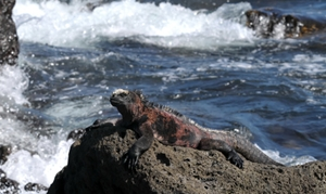 Yacht charters Galapagos Islands - endemic animals